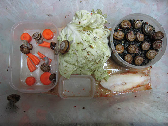 Snail, #B184