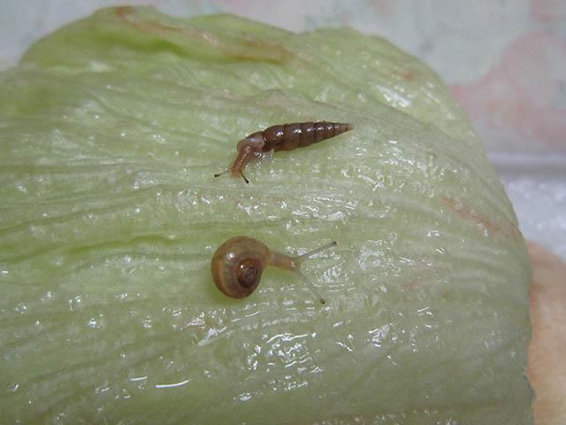 Snail, #B398 (Closeup)