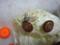 Snail, #B480