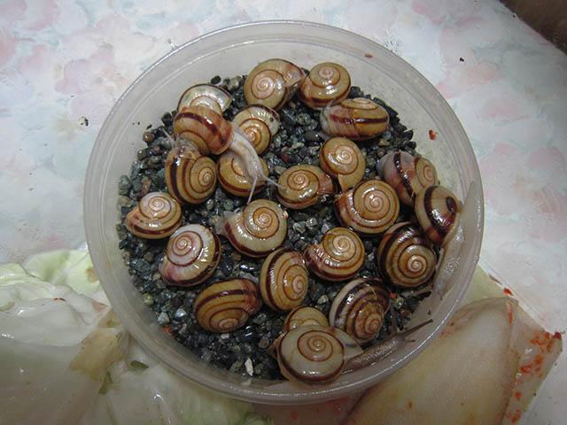Snail, #B483