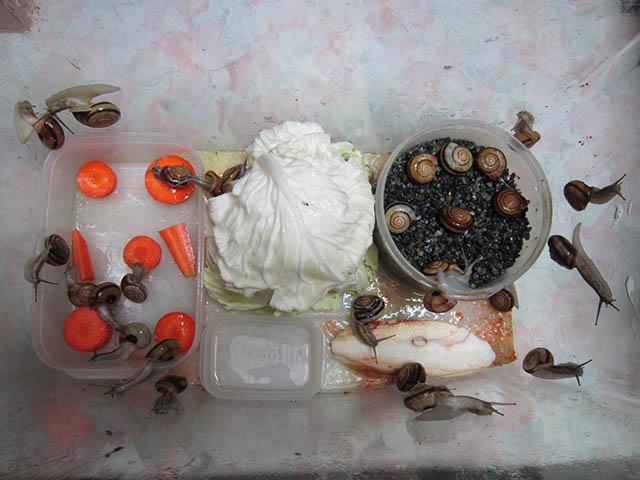 Snail, #B494