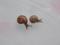 Snail, #B648 (Closeup)