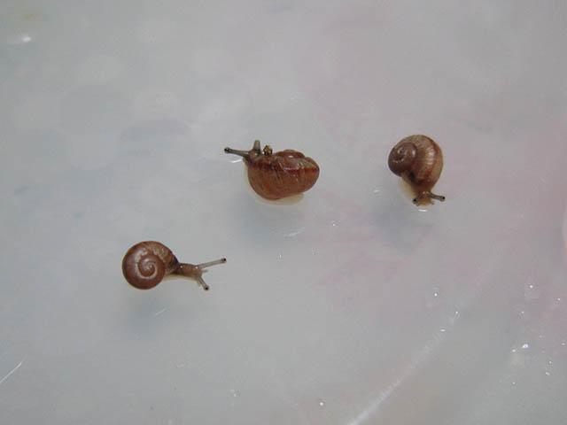 Snail, #B655 (Closeup)