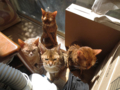 Abyssinian Sisters, #2010