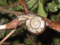 Snail, #0419 (Closeup)