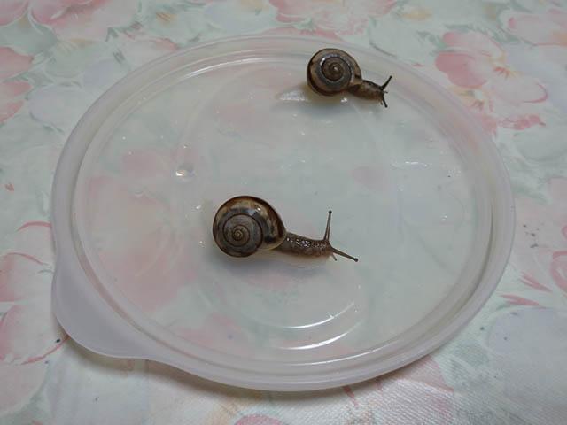 Snail, #0448