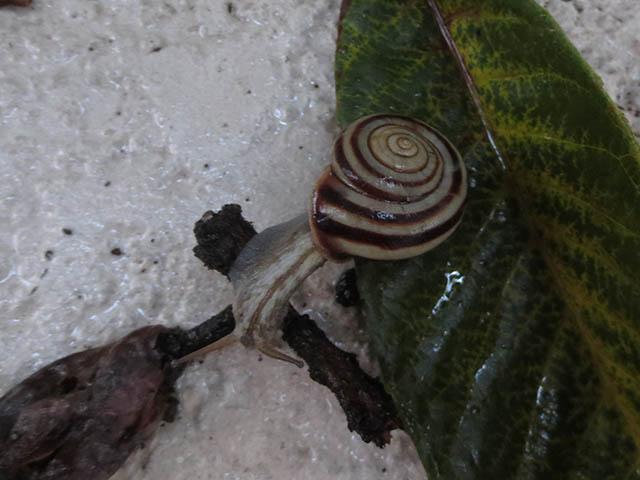 Snail, #0851