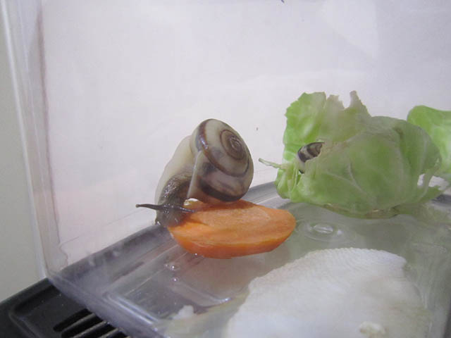Snail, #B677