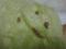 Snail, #B810 (Closeup)