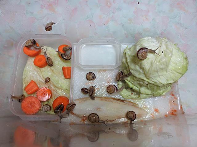 Snail, #0305