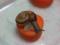 Snail, #0320 (Closeup)