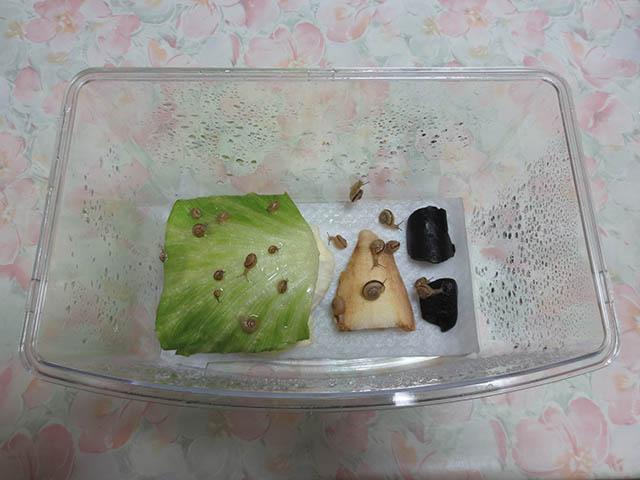 Snail, #0387