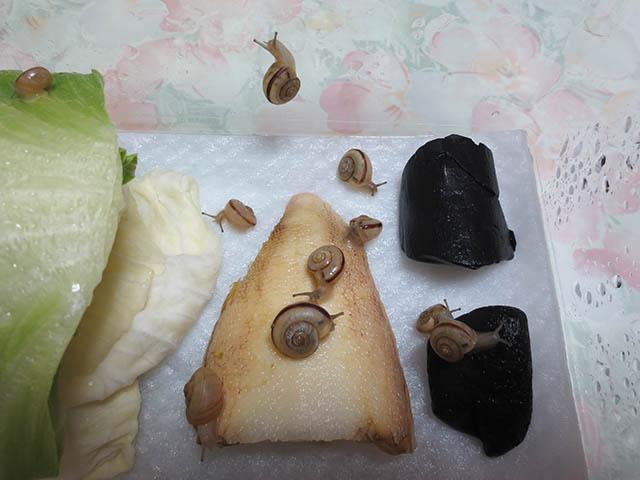 Snail, #0390 (Closeup)