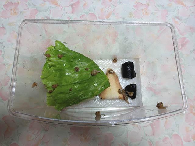 Snail, #0395