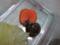 Snail, #1090 (Closeup)