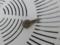 Snail, #1114 (Closeup)