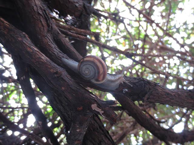 Snail, #1118