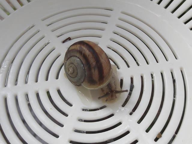 Snail, #1123 (Closeup)