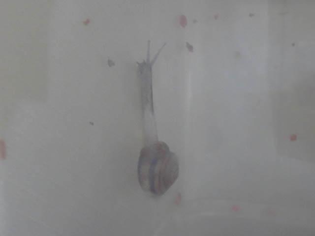 Snail, #0674 (Closeup)