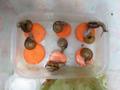 Snail, #0653
