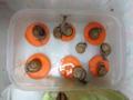 Snail, #0661