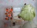 Snail, #0665