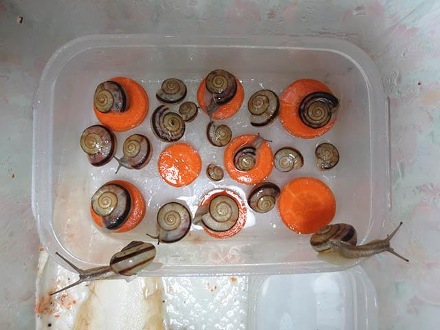 Snail, #0668