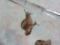Snail, #0797 (Closeup)