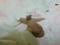 Snail, #0798 (Closeup)
