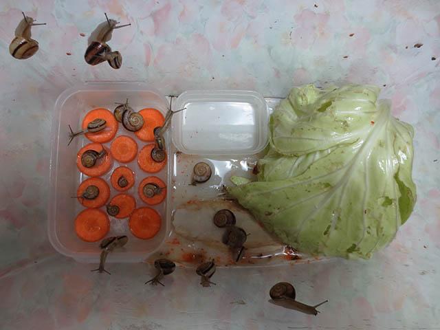 Snail, #0727