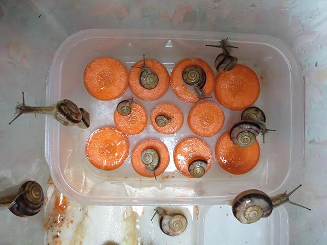 Snail, #0730
