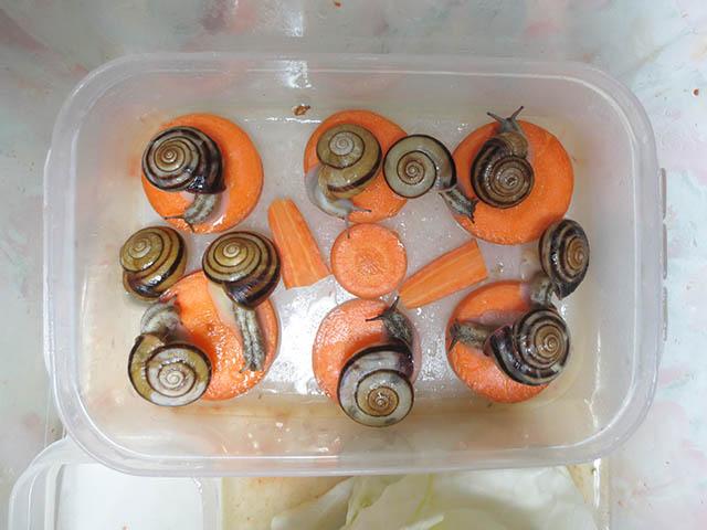 Snail, #0762