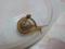 Snail, #1352