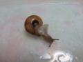 Snail, #1414