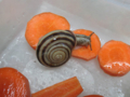 Snail, #0930 (Closeup)