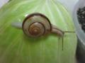 Snail, #0933 (Closeup)