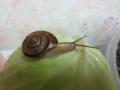 Snail, #0934