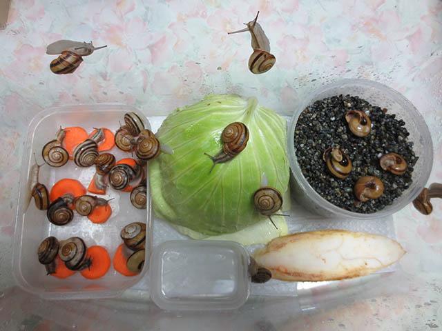 Snail, #0937