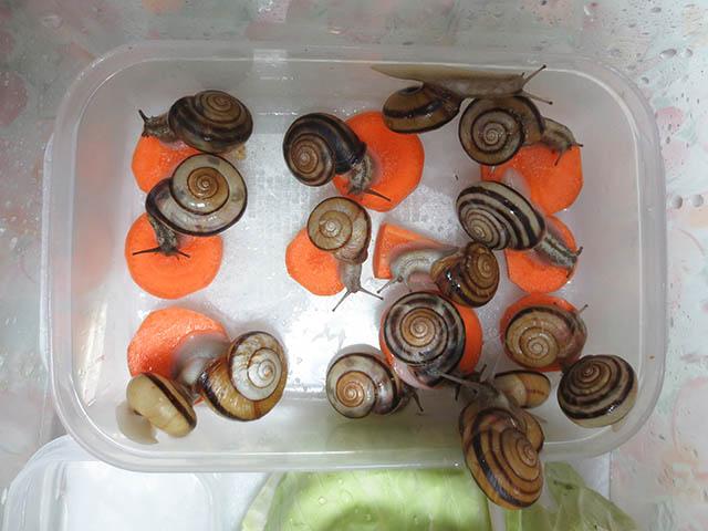 Snail, #0940