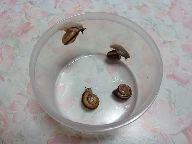 Snail, #0954