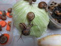 Snail, #0459
