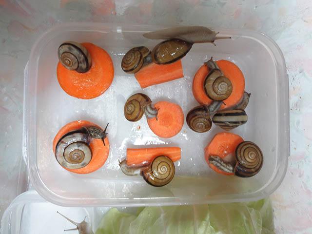 Snail, #0462