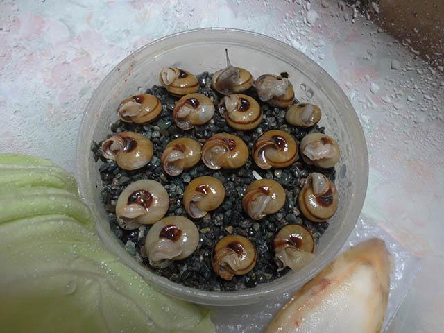 Snail, #0494