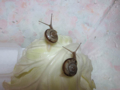 Snail, #0501