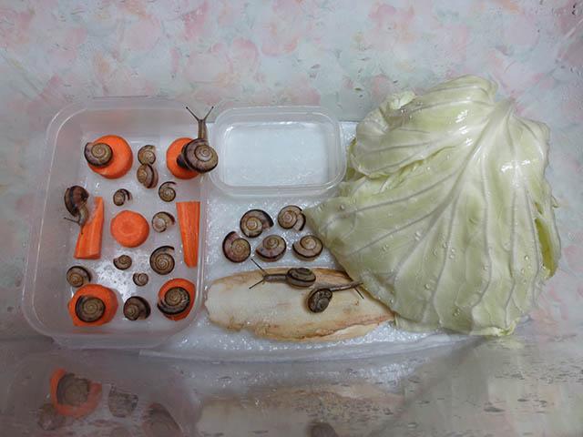 Snail, #0502