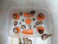 Snail, #0504