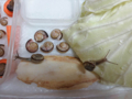 Snail, #0506