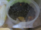 Snail, #0559