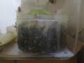Snail, #0571