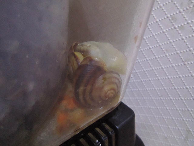 Snail, #A646